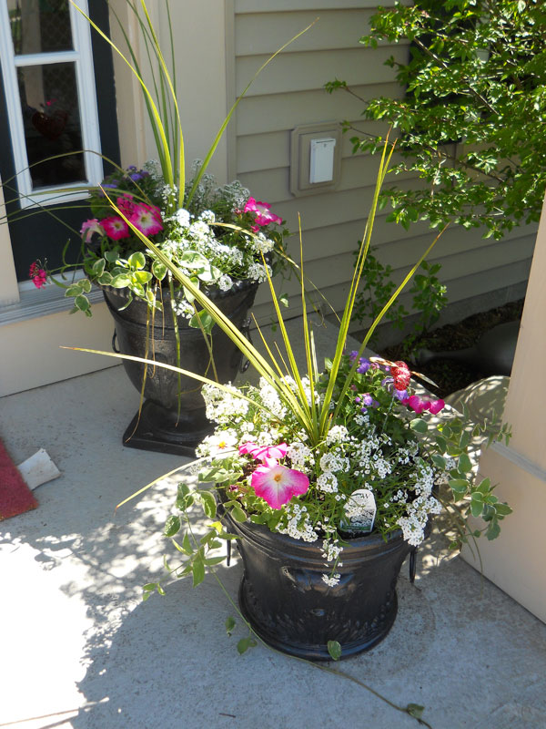 Spring has sprung english garden themed flower pots Spring flower arrangements for front door