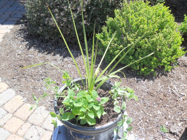 pot-with-spike-and-ivy-