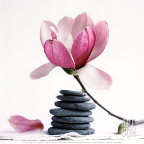 amelie-vuillon-magnolia-gallery_i-G-22-2249-GAAZD00Z